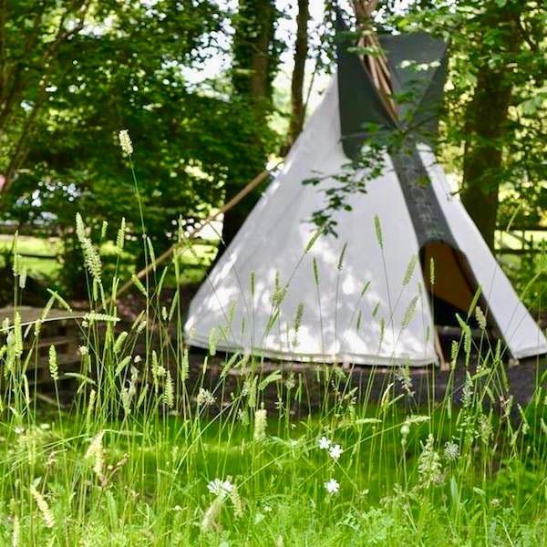 Children's play teepee beside wildlife meadow in woodland garden designed by Ann-Marie Powell Gardens