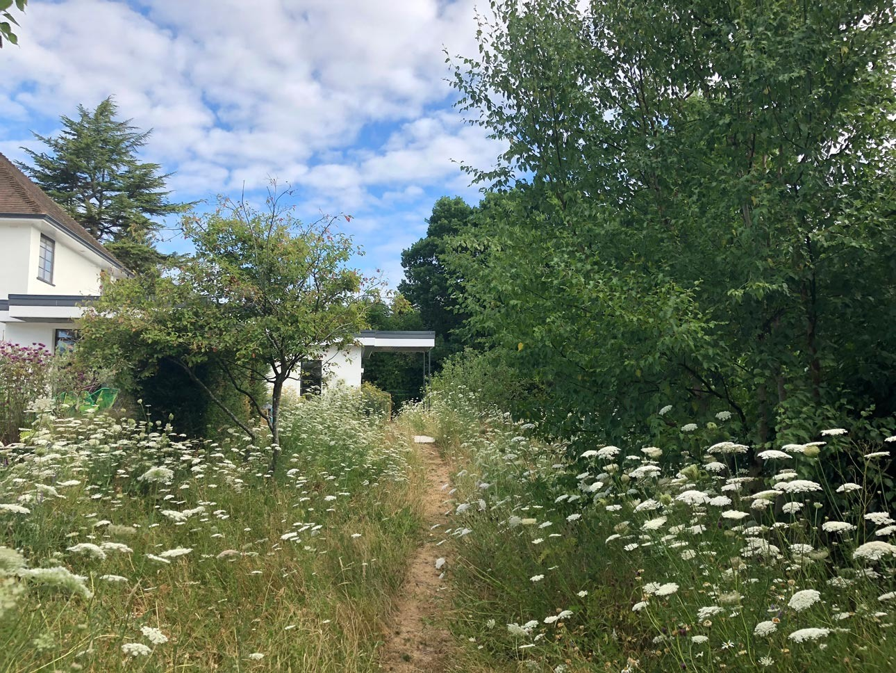 Grass path through wildlife meadow leading to contemporary private home with Amelanchier, garden designers Ann-Marie Powell.