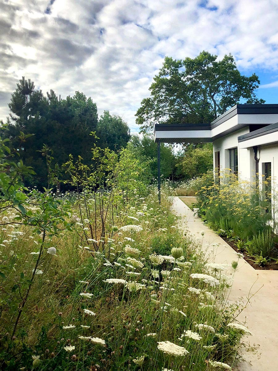 Porcelain path through meadow and herb bed with fennel in late summer, residential garden by Ann-Marie Powell design studio.