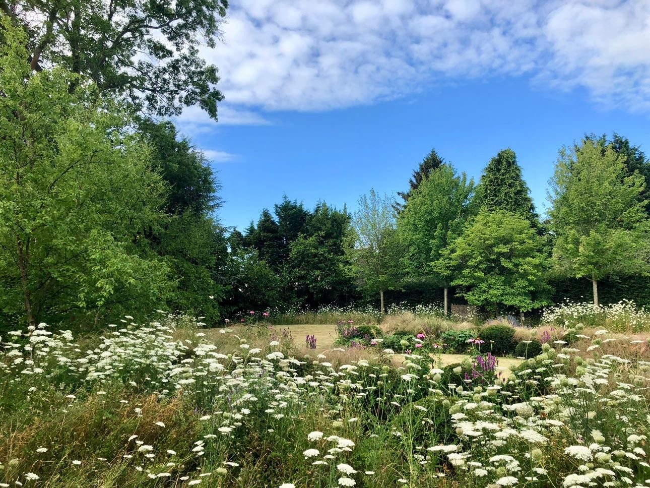 Mature tree planting around summer lawn and meadow in large residential private garden, Hampshire, designers Ann-Marie Powell.