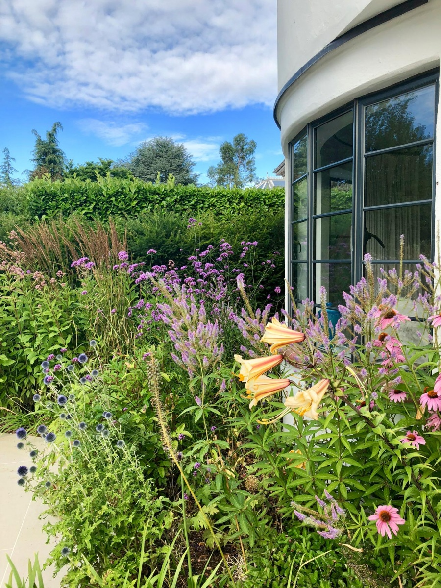 Perennial plantings of echinacea, lilies, veronicastrum, echinops and verbena. Planting designs by AMPG, Hampshire.