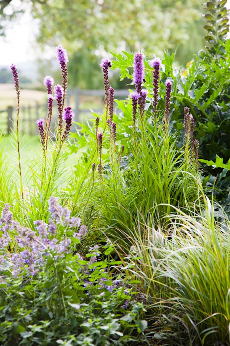 Liatris spicata, acanthus and nepeta in pink purple planting scheme in rural garden, Hampshire by Ann-Marie Powell Gardens.