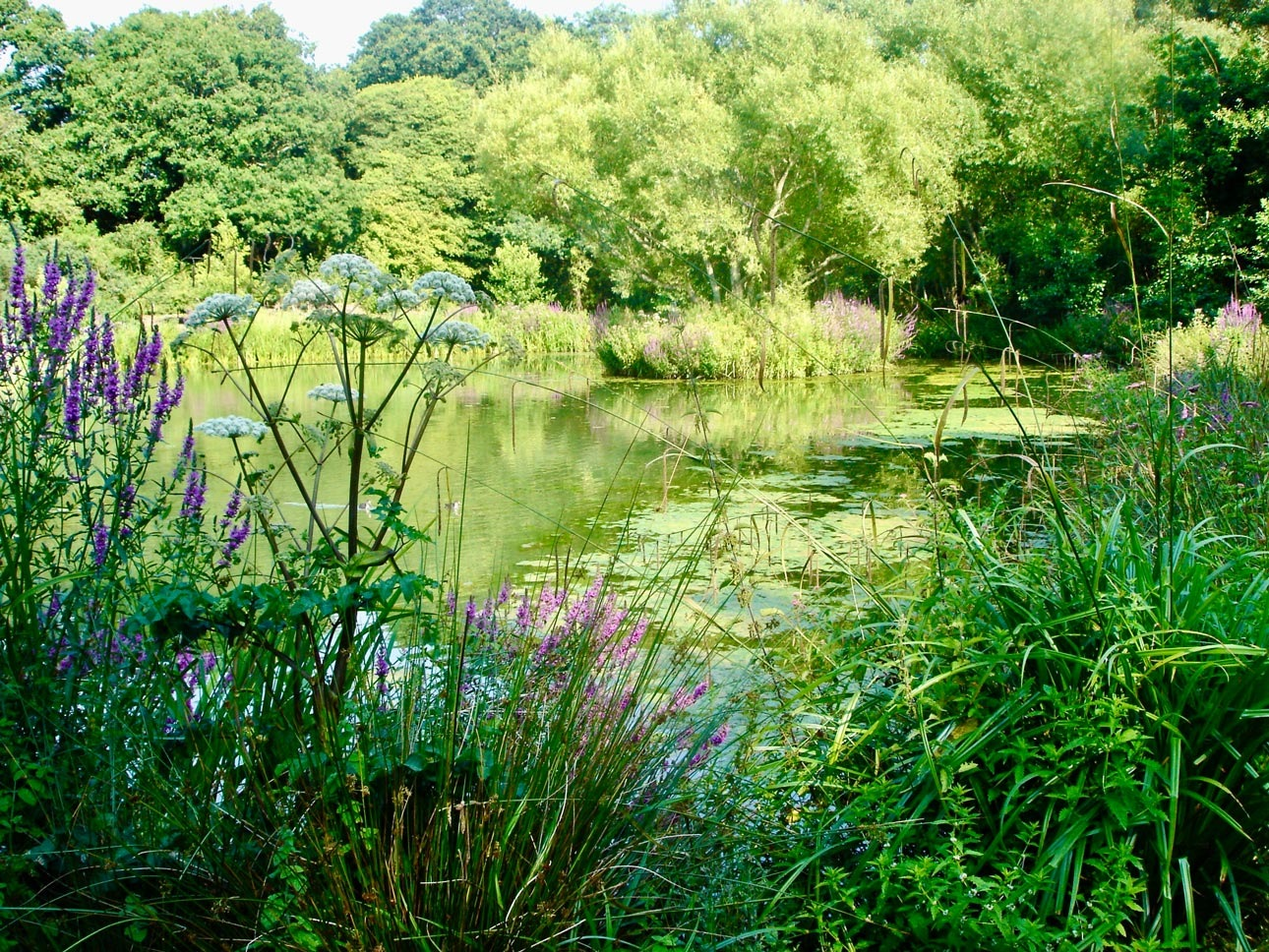 Large wildlife pond with native plants for pollinators, biodiversity and sustainability in large country garden, Hampshire.