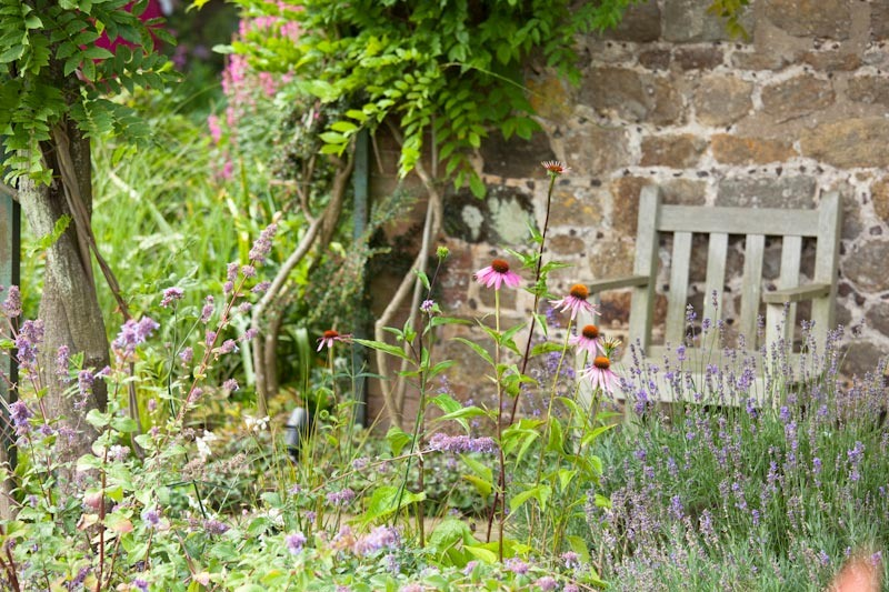 Garden chair amongst pollinator friendly plants Echinacea, lavender, design and planting plans by Ann-Marie Powell Gardens.