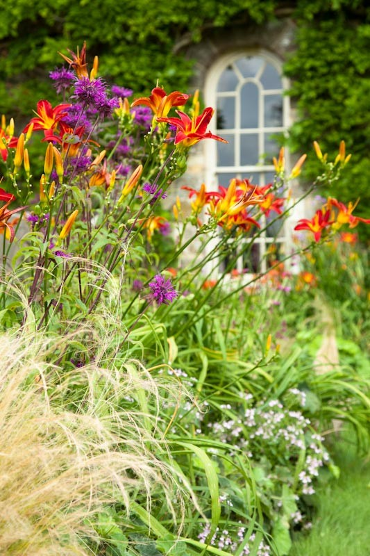 Hot planting with red and purple Hemerocallis Stafford and Monarda Scorpion, garden design by Ann-Marie Powell, Petersfield.
