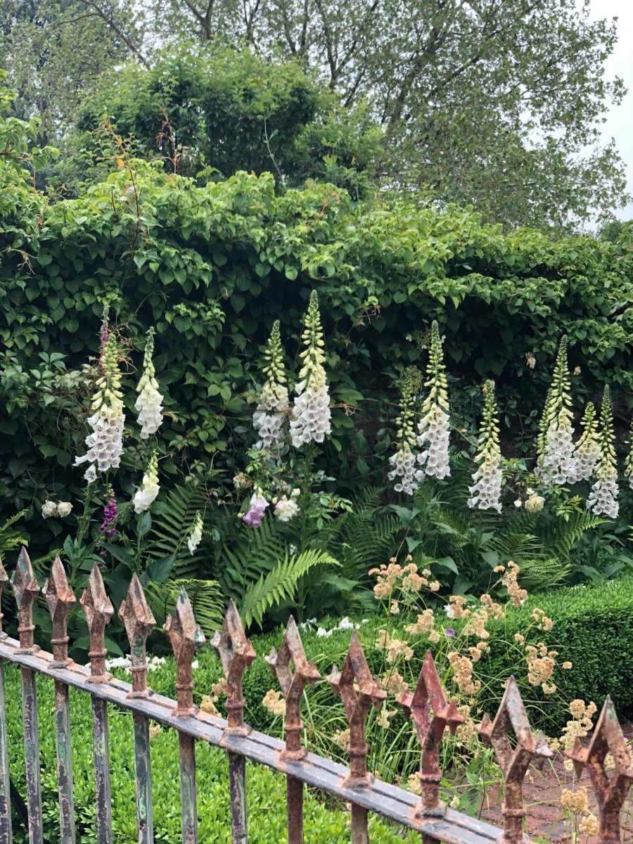 Foxgloves, ferns and climbing hydrangea in small front garden design in Hampshire garden by designers, Ann-Marie Powell.
