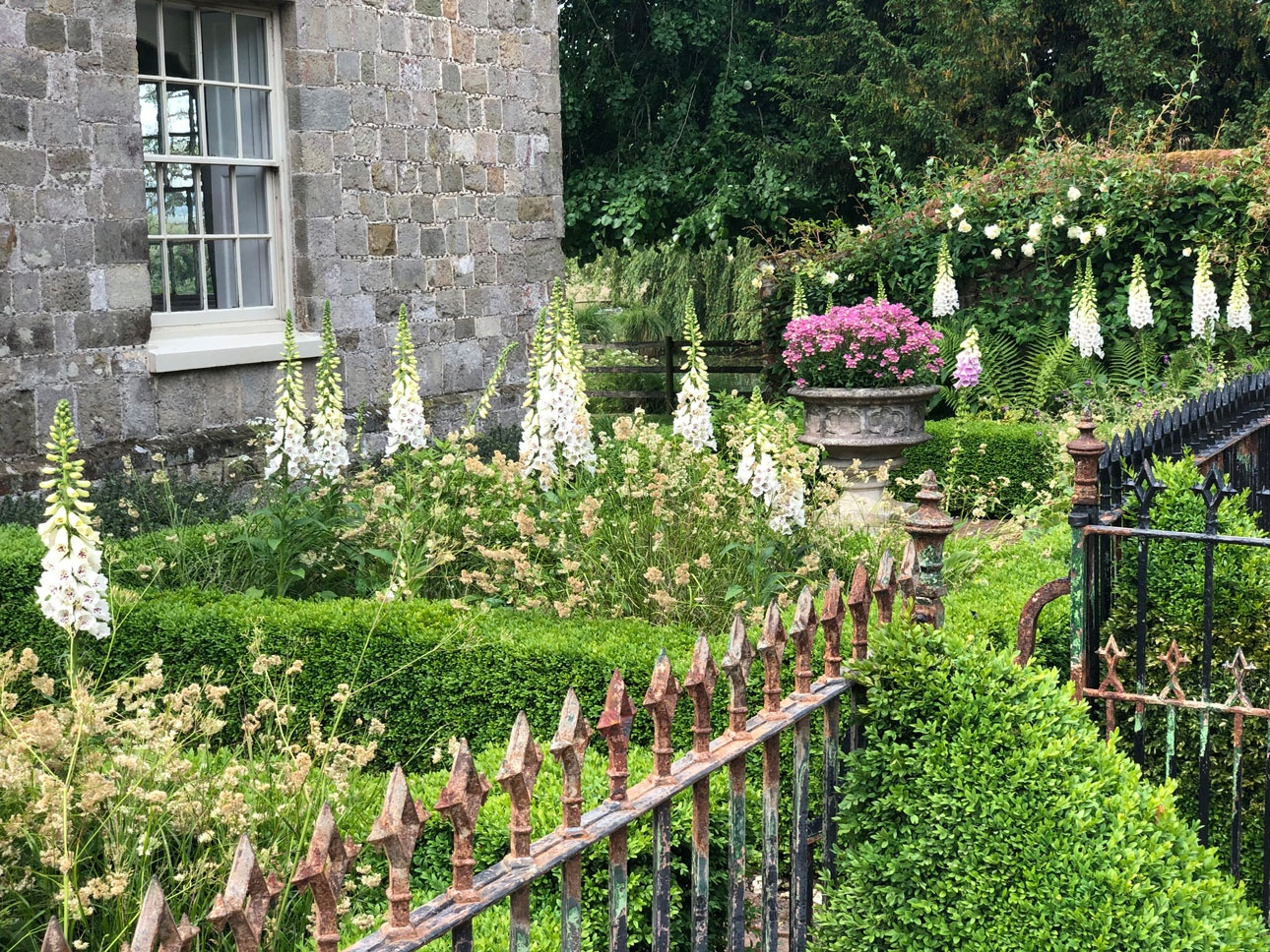 Elegant front garden with box parterre hedging and white foxgloves enclosed behind restored wrought iron railings