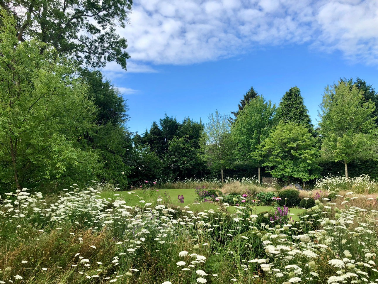Late summer wildflower meadow surrounding mown lawn in contemporary garden landscape design by Ann-Marie Powell Gardens