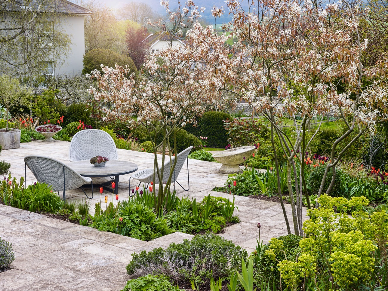 Purbeck limestone terrace with spring bulbs, green euphorbia, tulips and multistem amelanchier full of white blossom