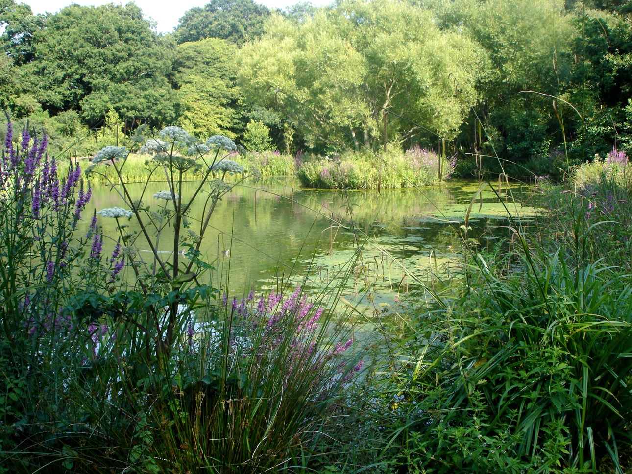 Large lake in garden landscape surrounded by naturalistic aquatic water planting designed by Ann-Marie Powell Gardens