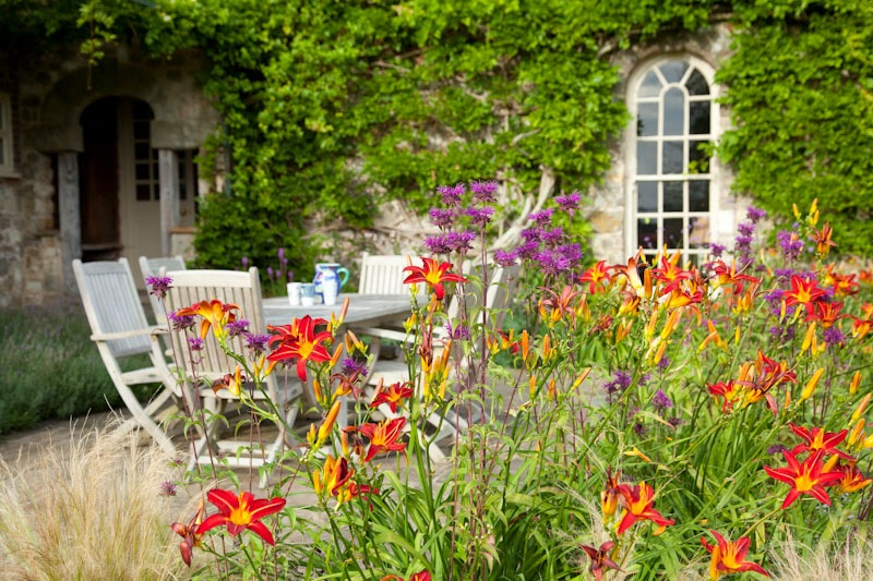 Red Hemerocallis with yellow throats with purple bergamot in contemporary country garden designed by Ann-Marie Powell Gardens
