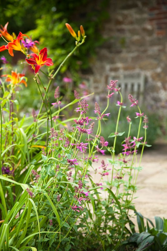 Bold planting combination of red day lilies and pink salvias in grade 2 listed country house garden designed by AMPG