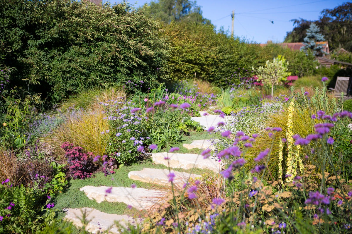 Rustic limestone steps interplanted with woolly thyme between boldly planted borders leading up to raised seating terrace