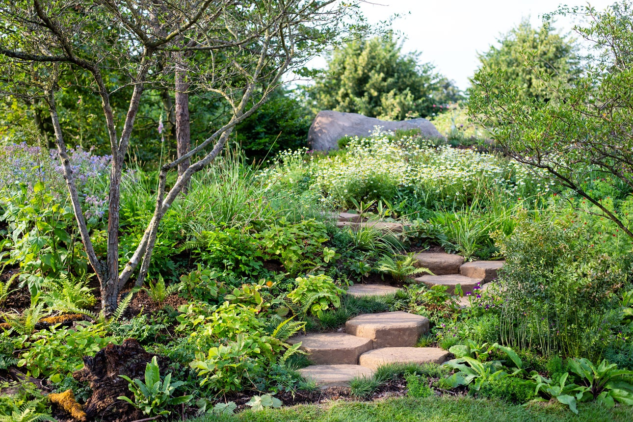Naturalistic planting design with multistem hawthorn trees underplanted with mixed ferns beside geometric steps