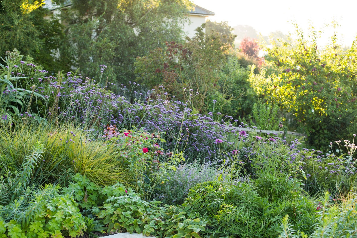 Loose planting design in wildlife friendly late summer border filled with purple verbena, euphorbia and grasses