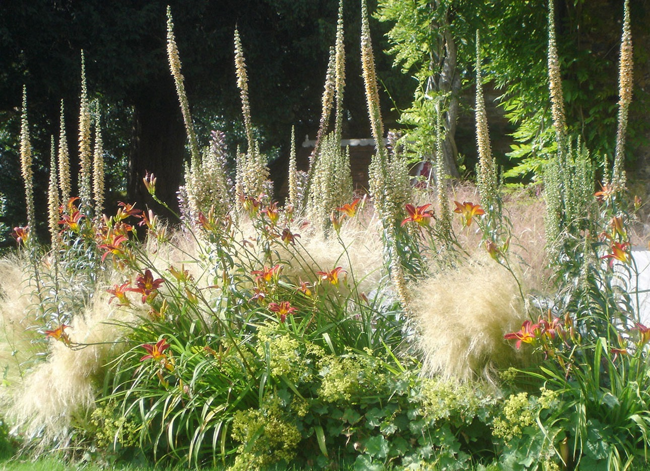 Dramatic planting design with towering spikes of verbascum, daylilies, alchemilla and grasses in new Sussex garden