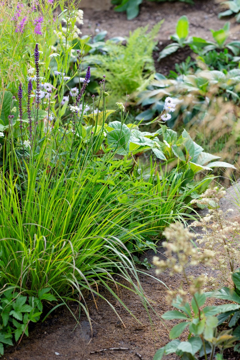Gentle stream planted with native grasses, salvia, daisies in show garden designed by Ann-Marie Powell Gardens