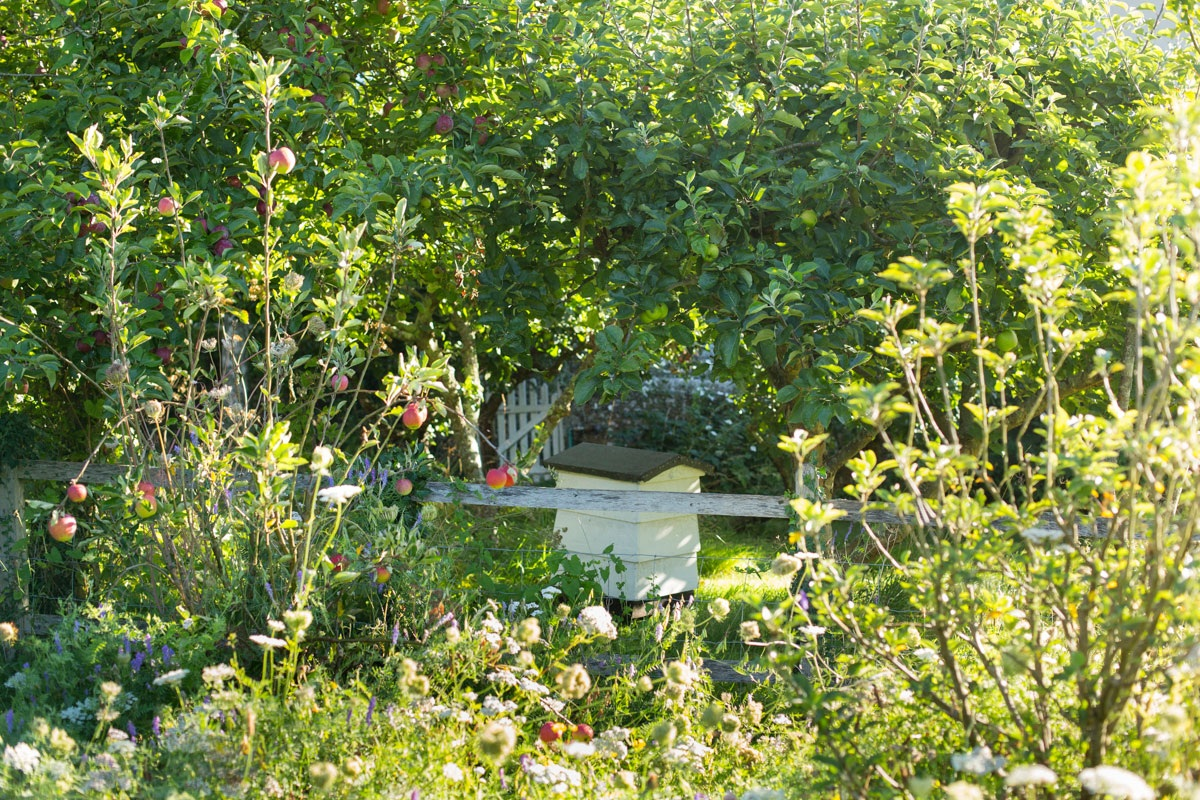 Orchard meadow with beehive in wildlife friendly West Sussex garden design by Ann-Marie Powell Gardens