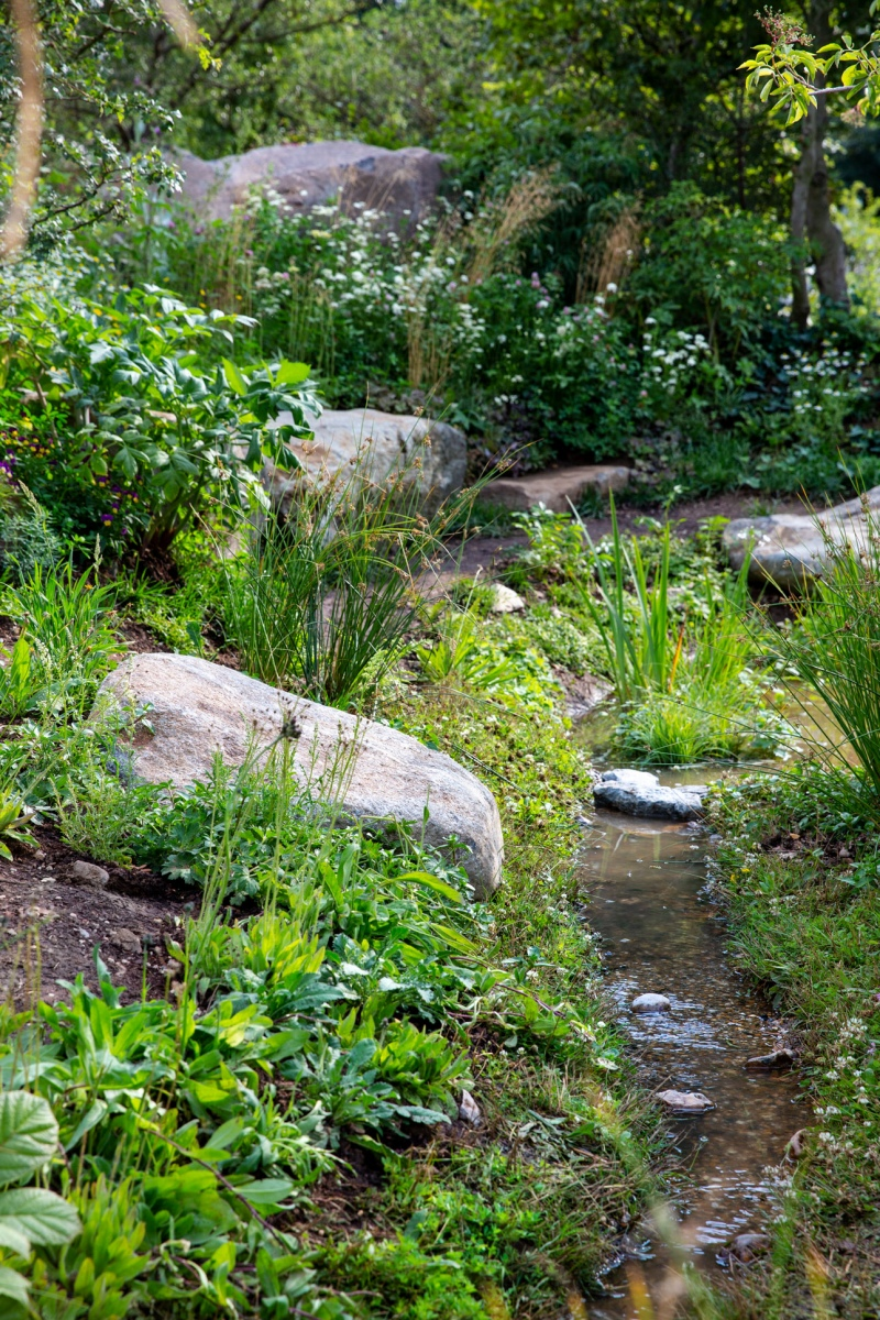 Welcoming wildlife into show garden with naturalistic stream designed for BBC Countryfile by Ann-Marie Powell Gardens