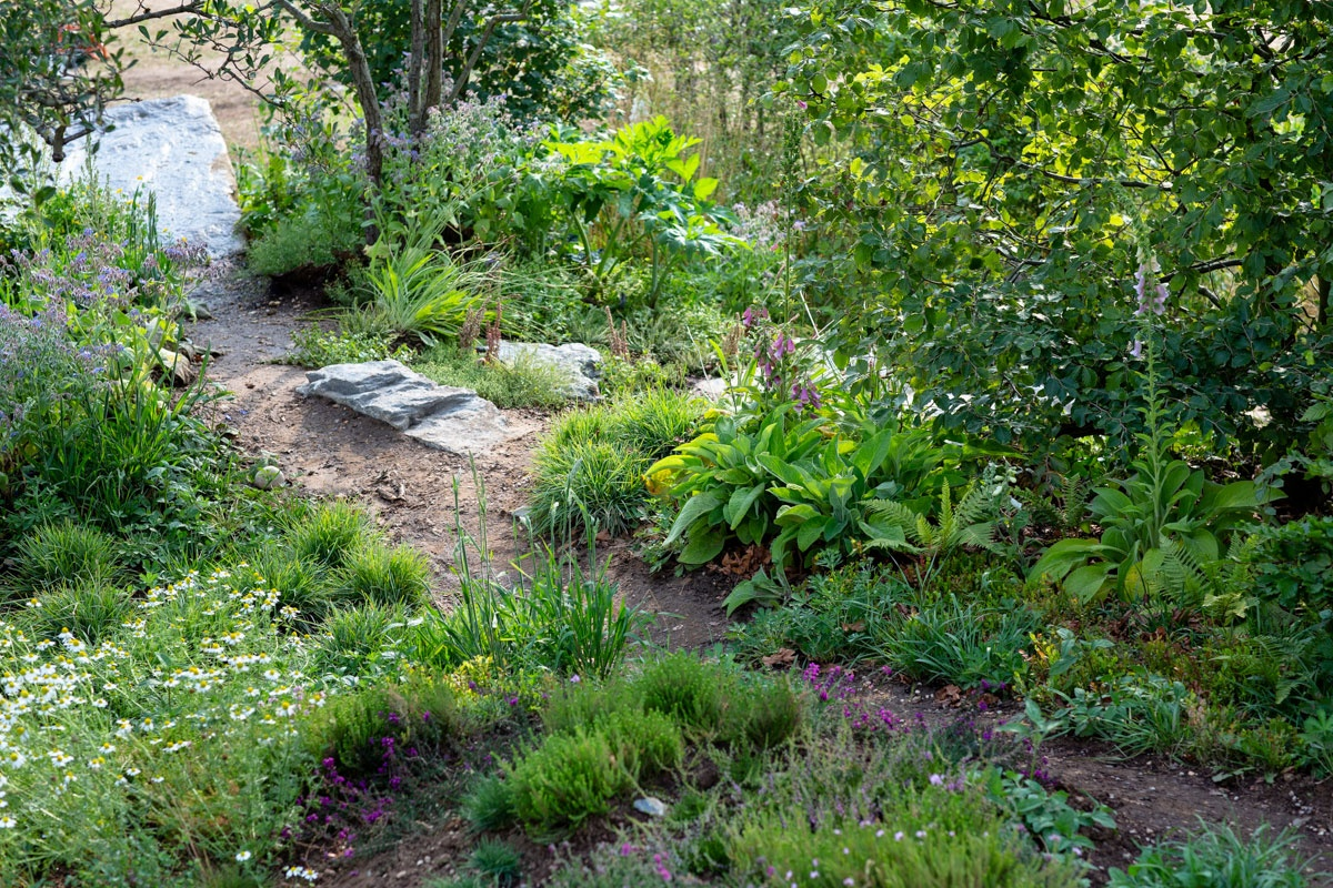 Natural wildlife friendly planting design in show garden for RHS Hampton Court Flower Show, sponsored by BBC Countryfile