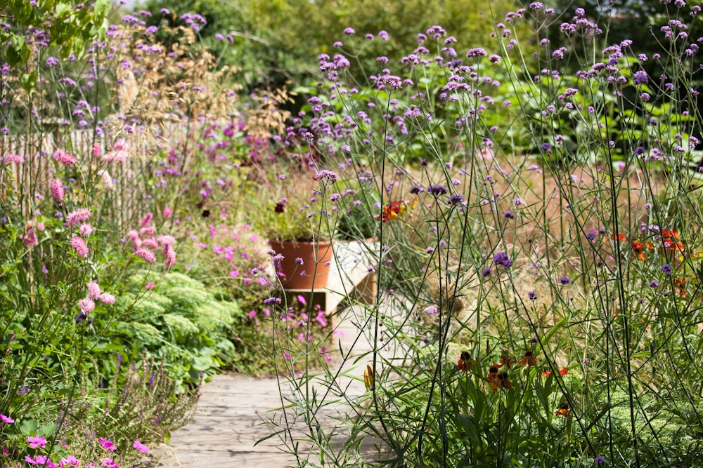 Purple verbena bonariensis and pink fluffy sanguisorba wildlife planting for pollinators designed by Ann-Marie Powell