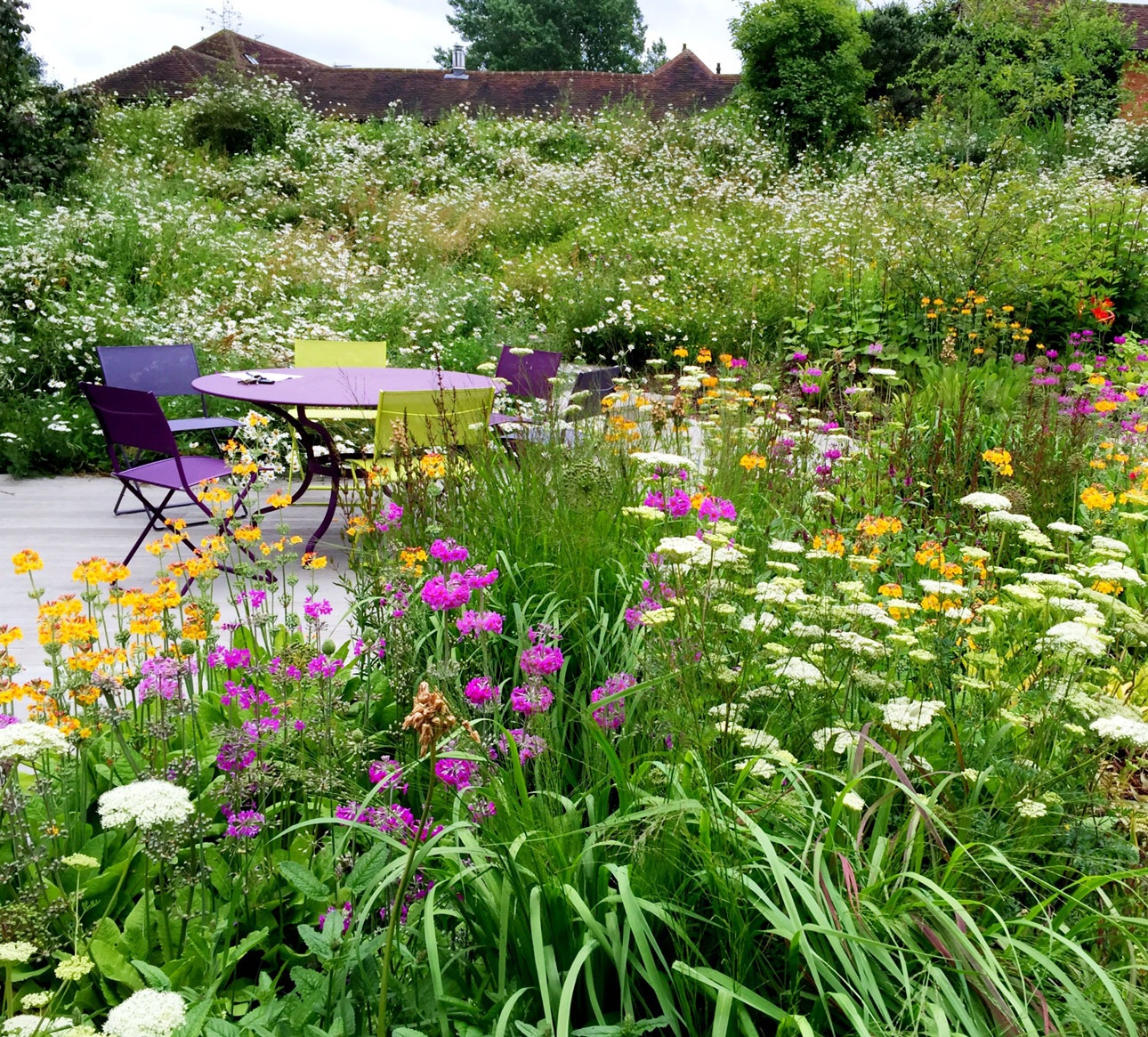Orange and pink primula flowers in wildflower meadow in Hampshire Garden designed by Ann-Marie Powell