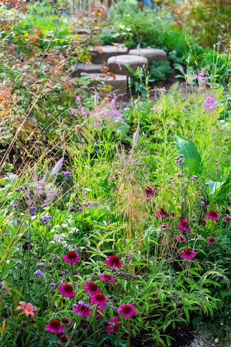 Bright pink echinacea, purple veronicastrum and verbena plants for bees and other pollinating insects