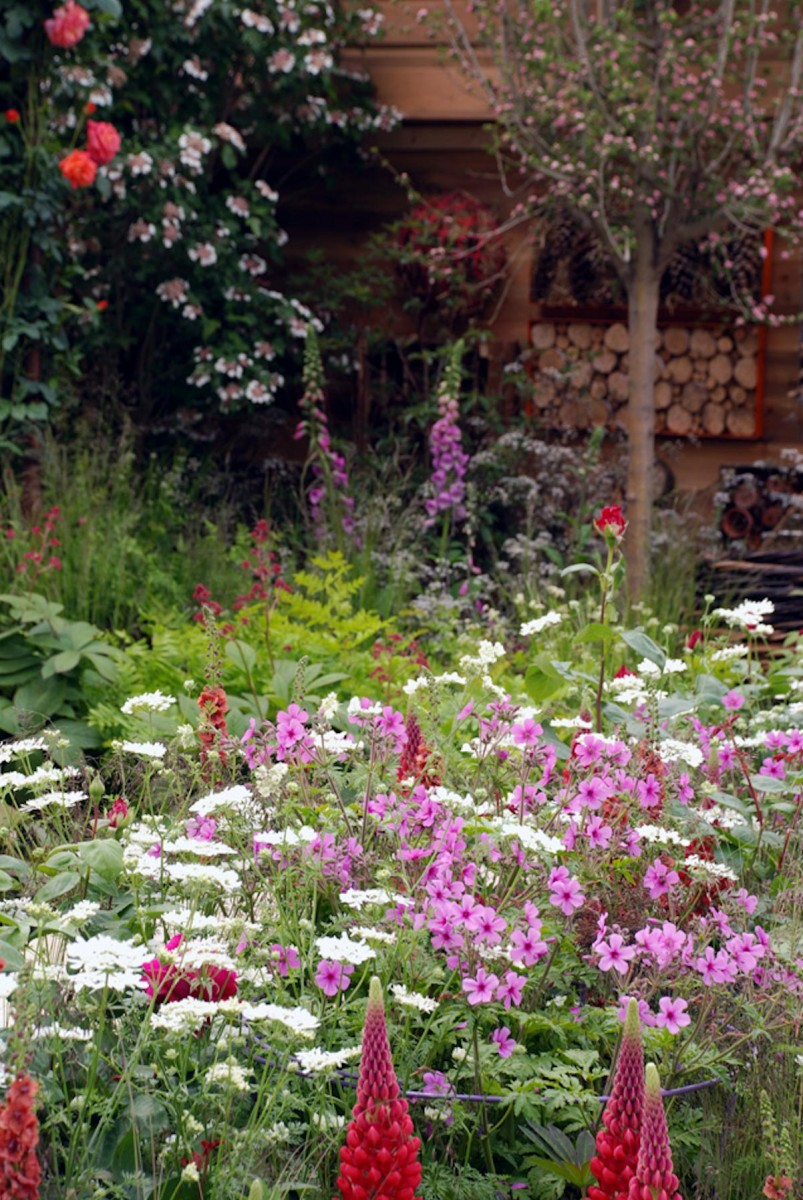 Ann-Marie Powell's planting design at RHS Chelsea flower show 2016; lupins, roses, foxgloves, ferns in front of bug houses.