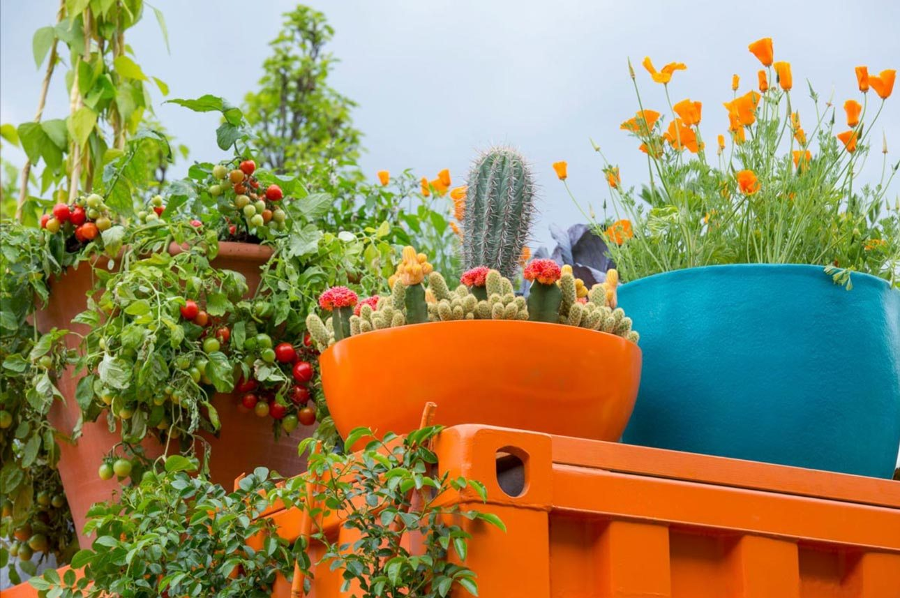 Cheerful roof garden with pots and containers of cactus, poppies and tomatoes at RHS Chelsea 2016 by Ann-Marie Powell.