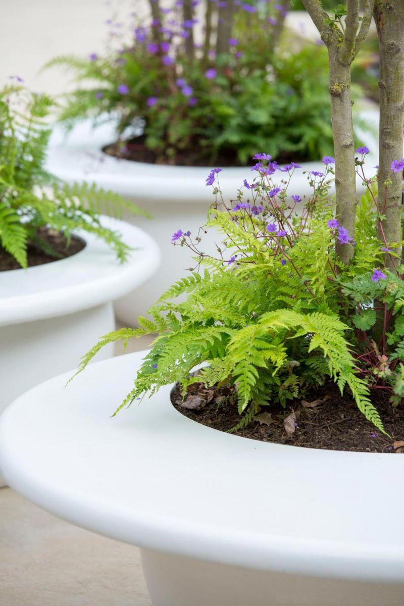 Ferns and geranium in fibreglass planter seats in RHS Chelsea garden 2016; designer Ann-Marie Powell Gardens, Hampshire.