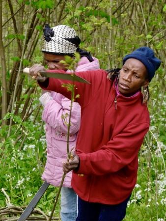 Preparing hazel twigs for a mongulu shelter