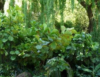 Rainforest Garden planting
