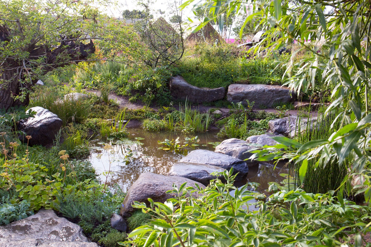Large boulder stepping stones over naturalistic pond planted with wildlife friendly aquatic water plants for BBC Countryfile