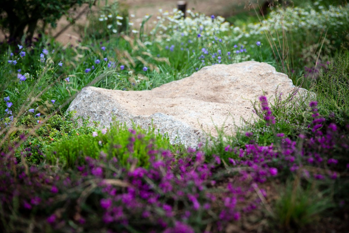 Pink heather planting amongst boulders in the Scottish region of BBC Countryfile show garden designed by Ann-Marie Powell