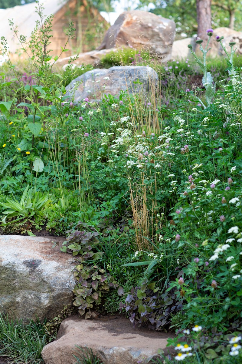 Wild, native planting edging steep bank in Countryfile 30th Anniversary show garden at Hampton Court Flower Show by AMPG