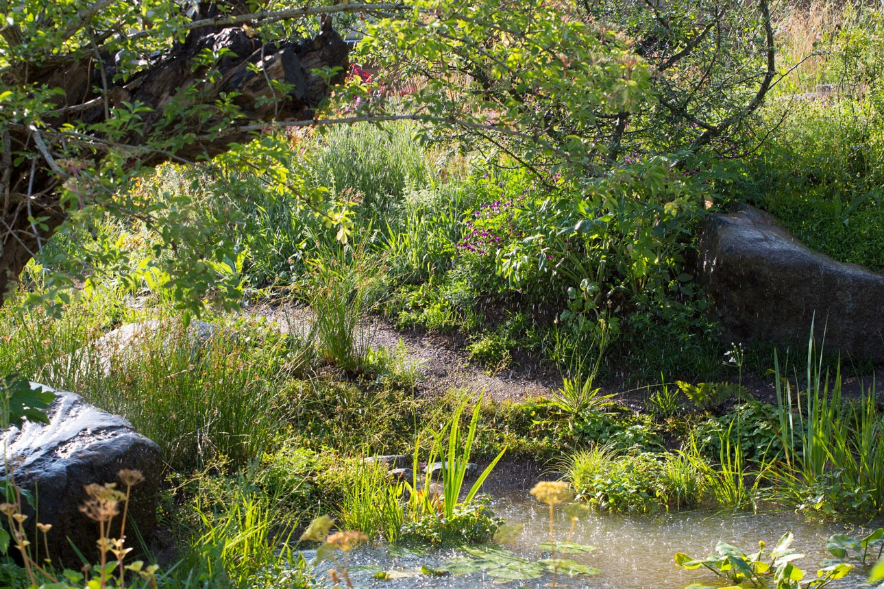 Sunlit wildlife pond with boulder seating in naturalistic garden designed by Ann-Marie Powell Gardens, Petersfield, Hampshire