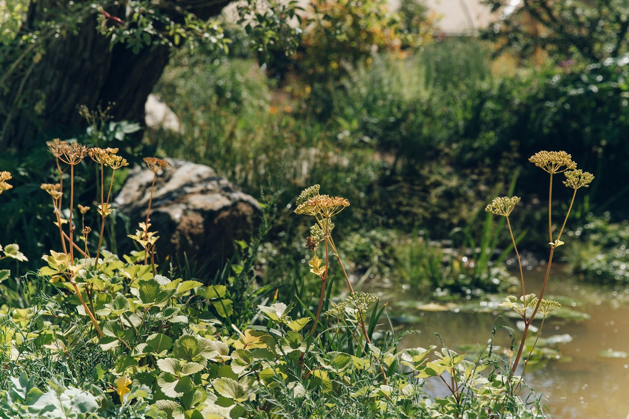 Native aquatic planting in show garden designed by Ann-Marie Powell Gardens for the RHS and BBC Countryfile