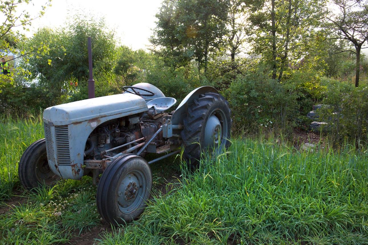 Vintage Little Fergie, Ferguson tractor in wheat field for BBC Countryfile show garden by landscape designer Ann-Marie Powell