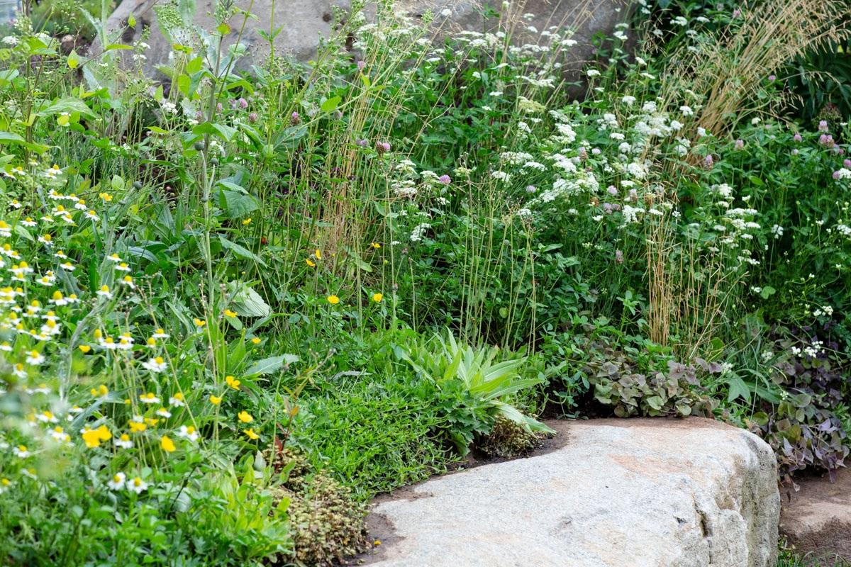Native wildflower planting along back of boulder seat in RHS Hampton Court show garden by landscape designer Ann-Marie Powell
