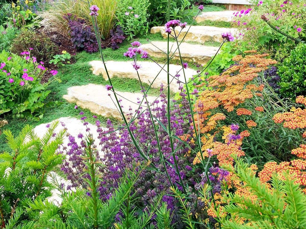 Verbena bonariensis, salvia, achillea and thyme lining hewn Purbeck stone steps in private garden design, West Sussex.