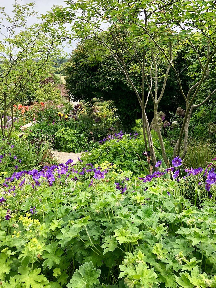 Geranium 'Rosemoor', Iris, Allium and Amelanchier in wildlife planting by Hampshire garden designer Ann-Marie Powell.