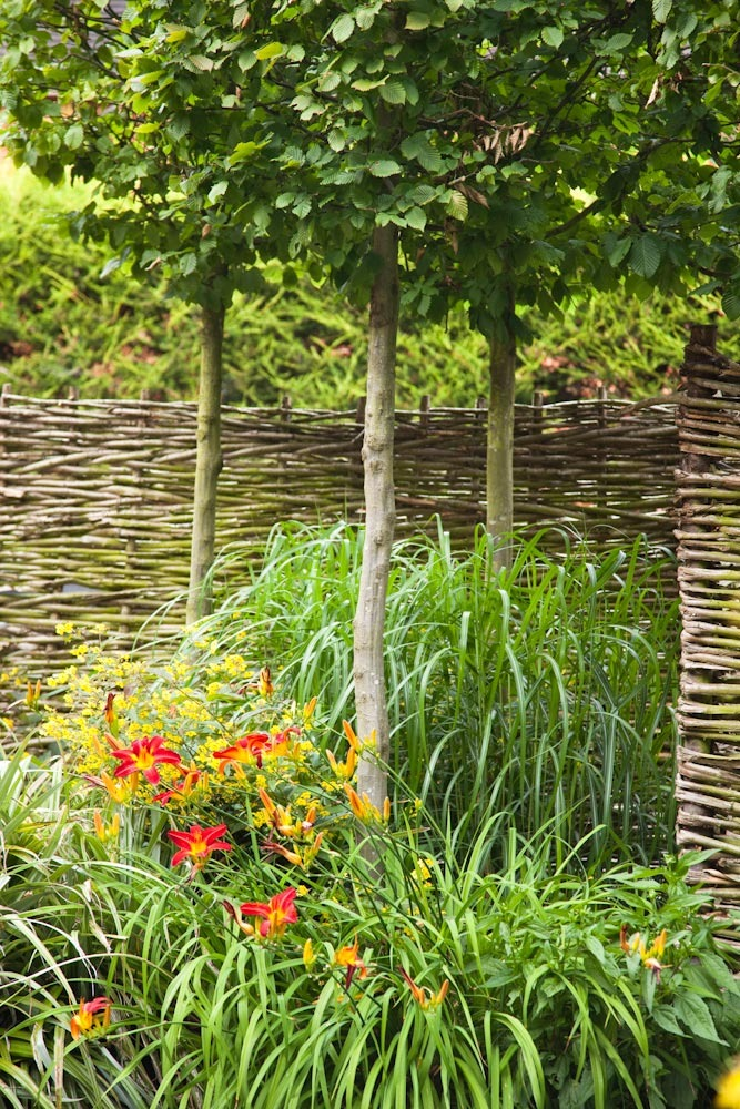 Insitu woven hazel fence by local craftsmen, Hampshire, with Carpinus betulus. Planting design by Ann-Marie Powell Gardens.