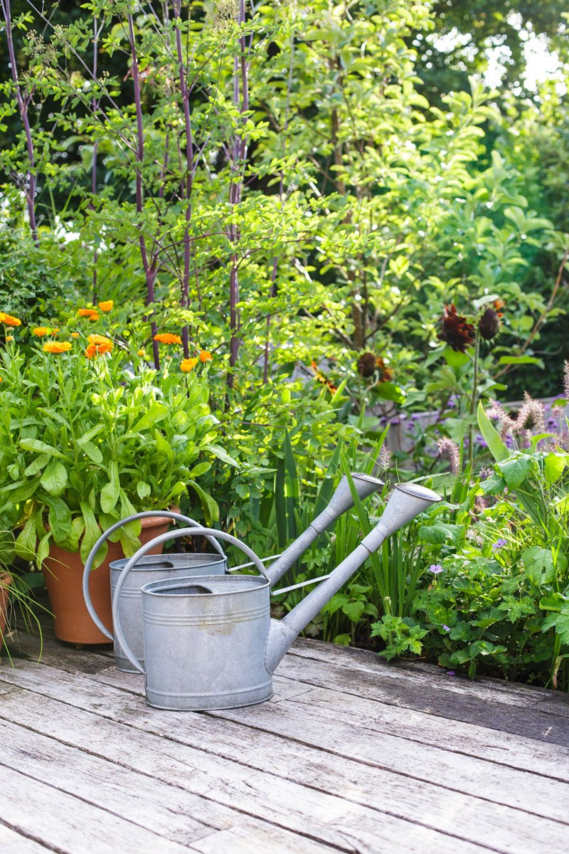 Watering cans in designer Ann-Marie Powell's Peter