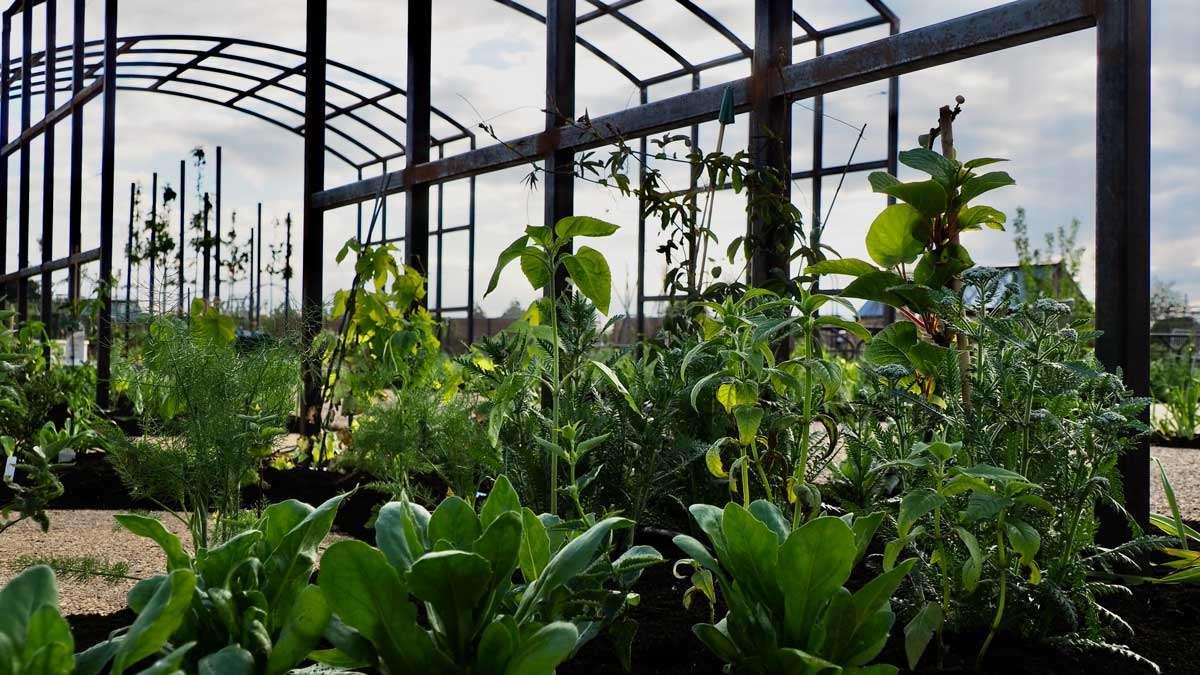 RHS Wisley Food Garden New Plantings RHS Wisley Hilltop by Ann-Marie Powell